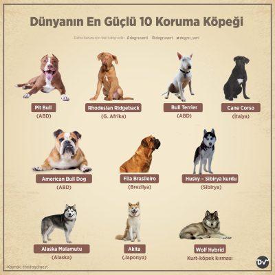 Dünyanın En Güçlü 10 Koruma Köpeği